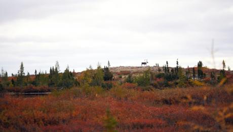 Caribou Cresting, in the Northwest Territories